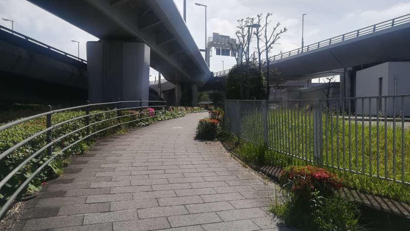 東京国際空港庁舎前歩道11