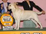 ラブラドール・レトリーバー子犬販売